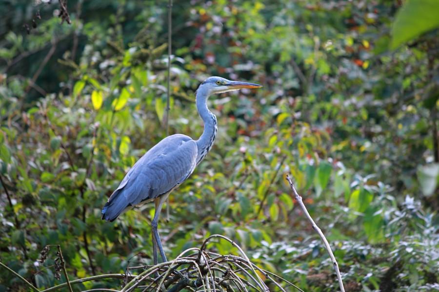 thumbnail-Vandaag gespot in het park van Torhout