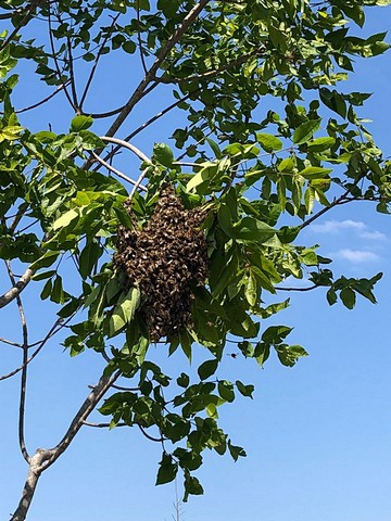 thumbnail-De bijen vliegen opnieuw uit!